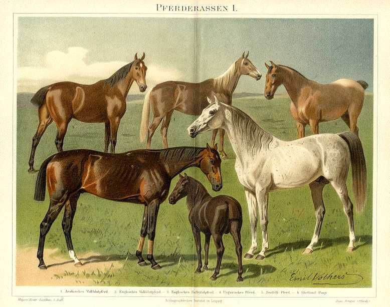 Классификация конских пород - фото 1abda1daac25c70a84cd155eaf5cc2b6, главная Лошадь , конный журнал EquiLIfe