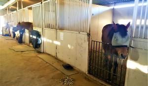 Там, где лошадь находит приют - фото 20171115_153155-300x175, главная Содержание лошади , конный журнал EquiLIfe