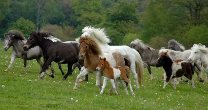 Классификация конских пород - фото 811233_30, главная Лошадь , конный журнал EquiLIfe