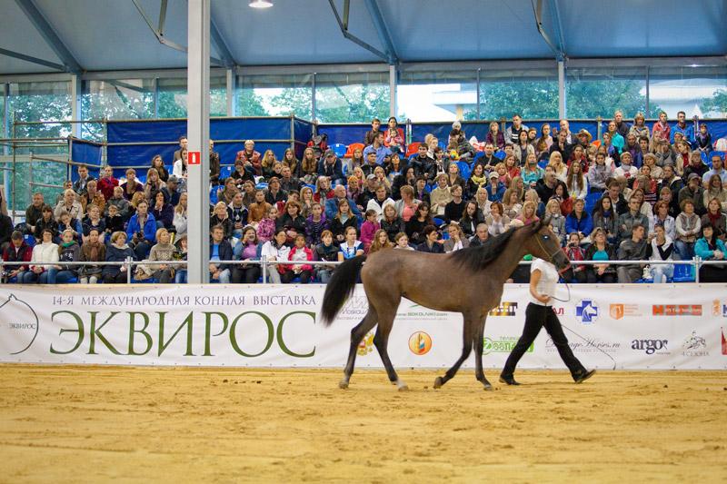 Российские конные выставки и фестивали в 2018 году - фото 0004699_0, главная Новости , конный журнал EquiLIfe