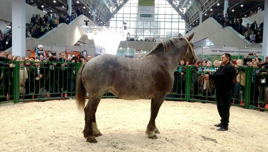 Российские конные выставки и фестивали в 2018 году - фото 64fe94fe7486e4e26fde6277b2acf0e3, главная Новости , конный журнал EquiLIfe
