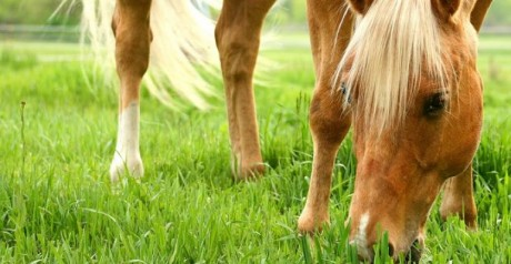 canstock_spring_horse-web