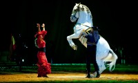 dancing horse picture 2013 02