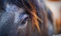 horse-left-eye_stuckincustoms_ncsa