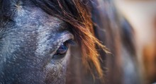 horse-left-eye_stuckincustoms_ncsa