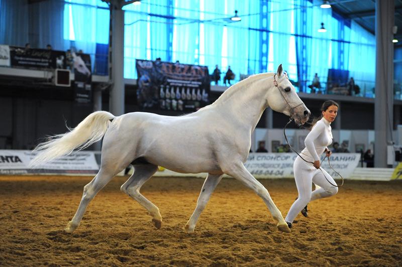 Российские конные выставки и фестивали в 2018 году - фото ipposfera-2011-16, главная Новости , конный журнал EquiLIfe