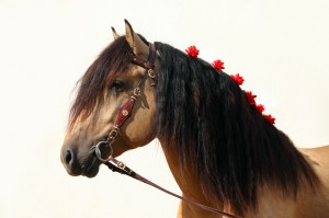 k00856 - фото k00856-300x199, , конный журнал EquiLIfe