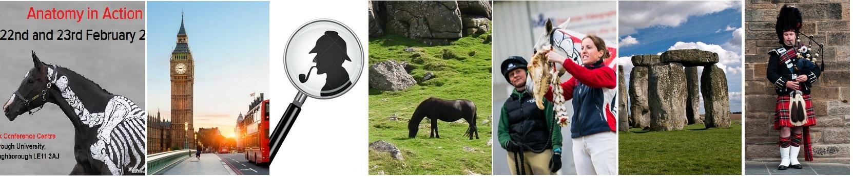 Конные поездки с EquiLife.ru - фото 1, , конный журнал EquiLIfe