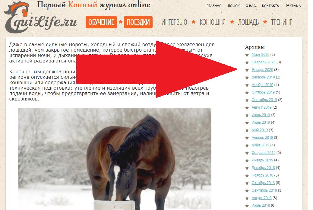 Конные поездки с EquiLife.ru - фото 10, , конный журнал EquiLIfe