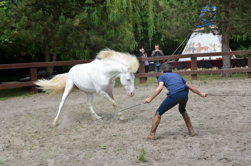 Интервью с каскадером шоу Люраши - Yann Vaille - фото 11692745_396097850594714_6652993055842718656_n, главная Интервью , конный журнал EquiLIfe