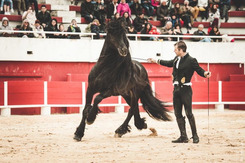 Интервью с каскадером шоу Люраши - Yann Vaille - фото 31955301_10216078108090221_809983819313577984_o, главная Интервью , конный журнал EquiLIfe
