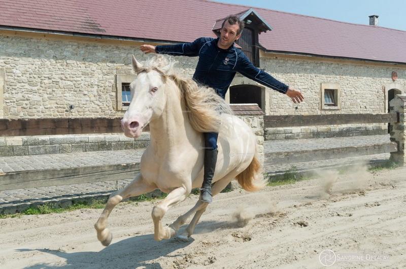 Интервью с каскадером шоу Люраши - Yann Vaille - фото 33420902_1878944448782594_4639189958198820864_o, главная Интервью , конный журнал EquiLIfe