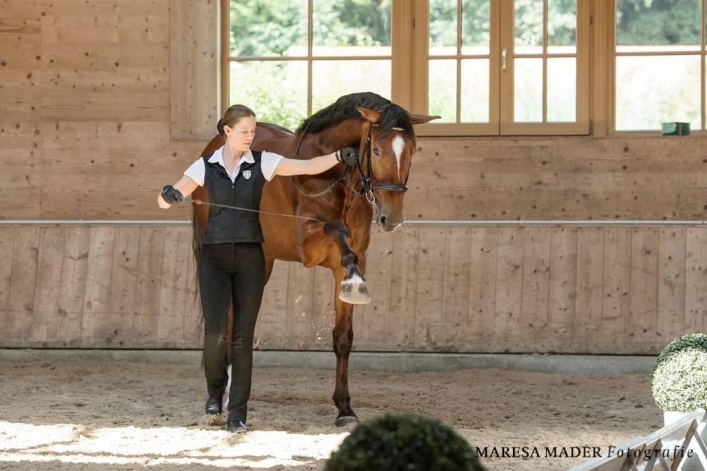 Workshop 2018 от Ани Беран как это было - фото 37390758_2080792801952732_2766436886879666176_o, Аня Беран главная События Содержание лошади Тренинг , конный журнал EquiLIfe