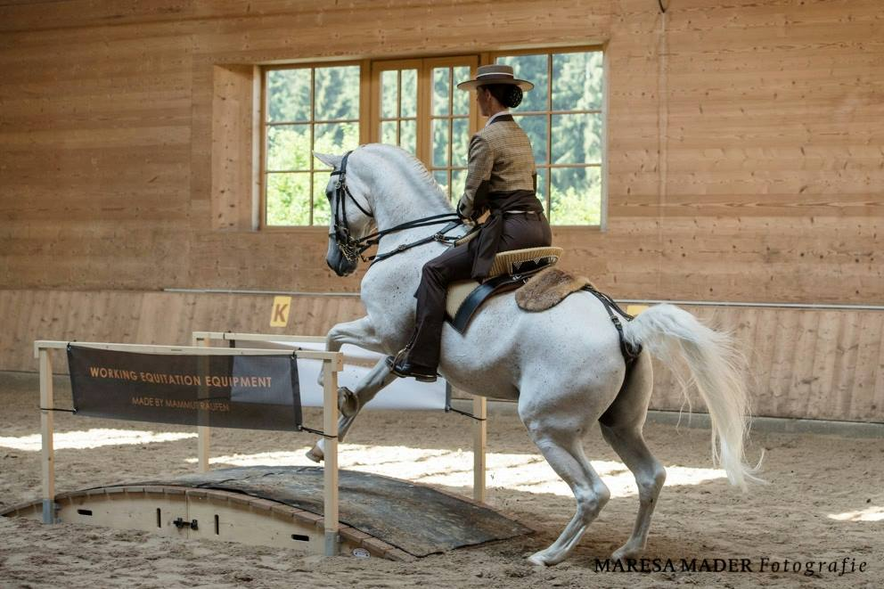 Workshop 2018 от Ани Беран как это было - фото 37592107_2080793071952705_5983145990314524672_o, Аня Беран главная События Содержание лошади Тренинг , конный журнал EquiLIfe