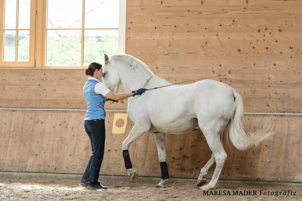 Workshop 2018 от Ани Беран как это было - фото 37651315_2086761264689219_2914777631285051392_o, Аня Беран главная События Содержание лошади Тренинг , конный журнал EquiLIfe