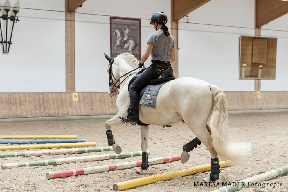 Workshop 2018 от Ани Беран как это было - фото 37681263_2086761154689230_8703376708490756096_o, Аня Беран главная События Содержание лошади Тренинг , конный журнал EquiLIfe