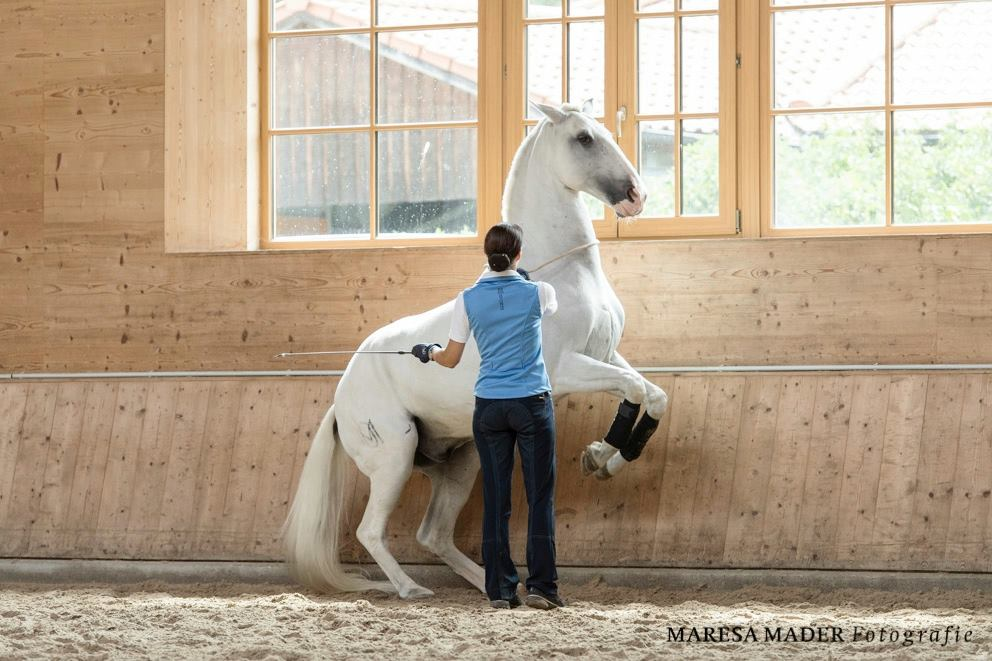 Workshop 2018 от Ани Беран как это было - фото 37691959_2086761401355872_7332915647212421120_o, Аня Беран главная События Содержание лошади Тренинг , конный журнал EquiLIfe