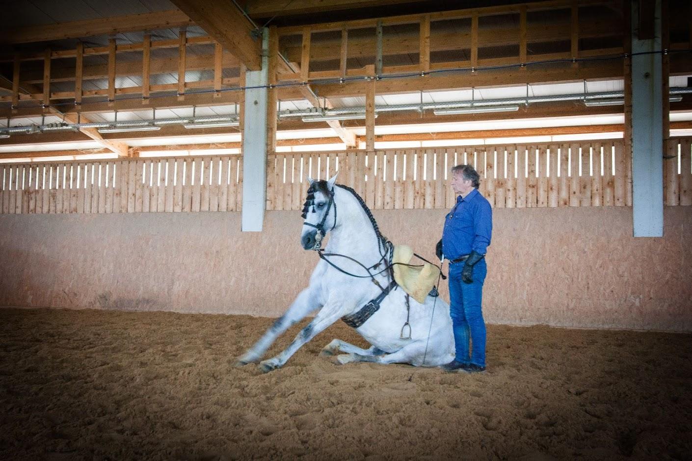 Отзыв о поездке c EquiLife.ru на семинар Ани Беран - фото IMG_0527, Аня Беран главная События Тренинг , конный журнал EquiLIfe