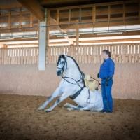 Международный WORKSHOP 2019 от Ани Беран и Сказочная Бавария - фото IMG_05271-200x200, , конный журнал EquiLIfe