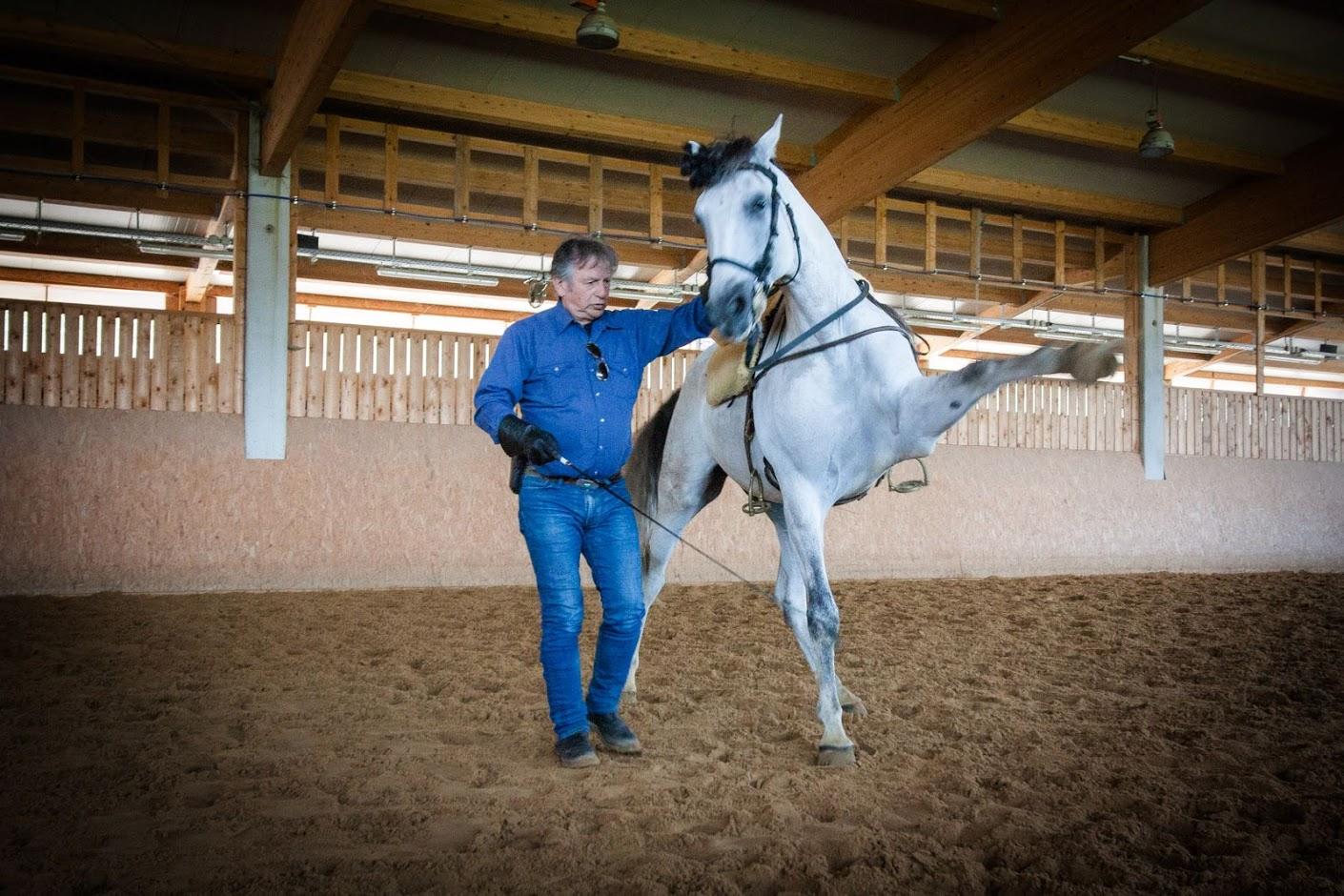 Отзыв о поездке c EquiLife.ru на семинар Ани Беран - фото IMG_0543, Аня Беран главная События Тренинг , конный журнал EquiLIfe