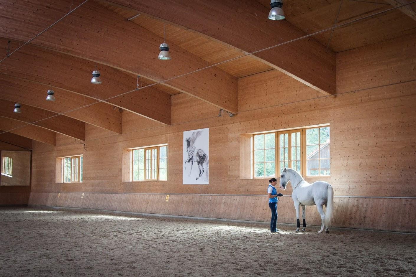Отзыв о поездке c EquiLife.ru на семинар Ани Беран - фото IMG_0910, Аня Беран главная События Тренинг , конный журнал EquiLIfe