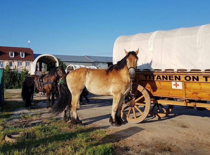 """Сегодня тяжеловозы – мясная порода. Так не должно быть! Интервью """"Титаны в пути"""" - фото 3, главная Интервью События , конный журнал EquiLIfe"""
