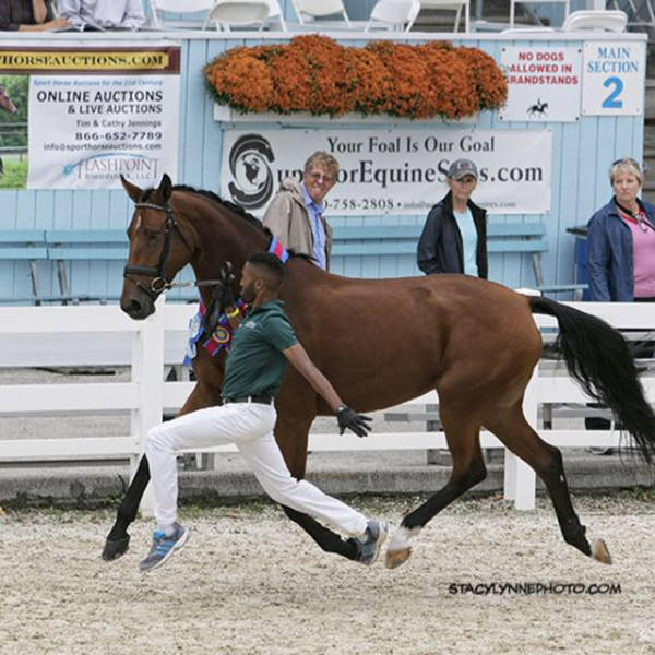 Бонитировка лошадей: экстерьер, движения и интерьер  - фото D04Tr6IY9gk, главная Лошадь , конный журнал EquiLIfe