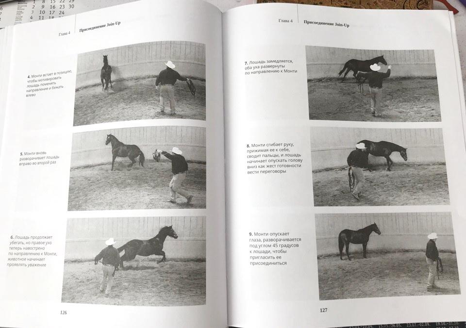"""О книге Монти Робертса """"Из рук в руки"""": о """"Join-up"""", но не только о нем! - фото Wk8ieRxJ8rs, главная Книги о лошадях , конный журнал EquiLIfe"""