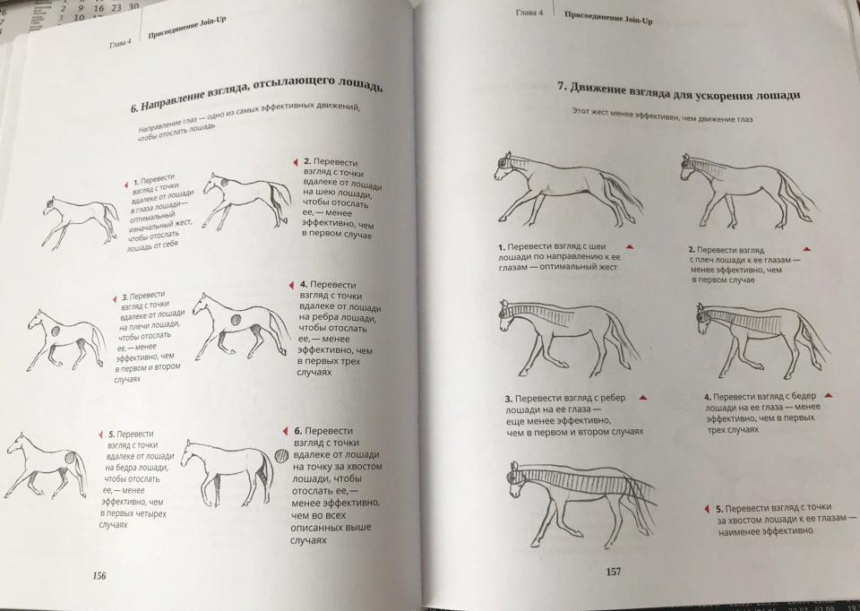 """О книге Монти Робертса """"Из рук в руки"""": о """"Join-up"""", но не только о нем! - фото lPMXsRGOXFo, главная Книги о лошадях , конный журнал EquiLIfe"""