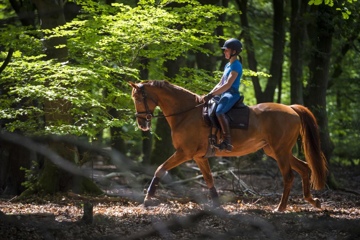 Прикладные виды конного спорта и туризма - фото 160613013_abfa4, главная Разное , конный журнал EquiLIfe