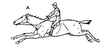 Ошибки конной живописи. Часть 1 - фото CDlZg-ynj-Q1, главная Книги о лошадях , конный журнал EquiLIfe