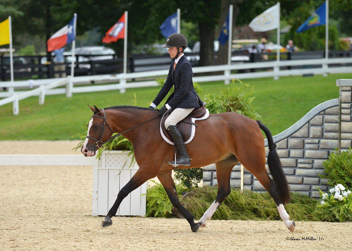 Прикладные виды конного спорта и туризма - фото CpnnlITXEAAbxWi, главная Разное , конный журнал EquiLIfe