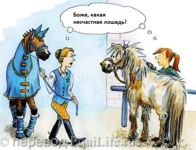 Жуткая история - фото ktevaGWIpt0_wm, , конный журнал EquiLIfe