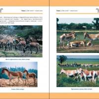 Лошадь Пржевальского: Последняя дикая лошадь на планете - фото index-200x200, главная Книги о лошадях , конный журнал EquiLIfe