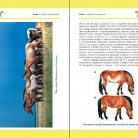 Лошадь Пржевальского: Последняя дикая лошадь на планете - фото index0-200x200, Recommendation Книги о лошадях , конный журнал EquiLIfe