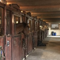 Франция с EquiLife.ru 22-28 ноября 2018 - фото IMG_7780-200x200, , конный журнал EquiLIfe