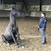 Франция с EquiLife.ru 22-28 ноября 2018 - фото IMG_8008-200x200, , конный журнал EquiLIfe