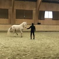 Франция с EquiLife.ru 22-28 ноября 2018 - фото IMG_8110-200x200, , конный журнал EquiLIfe