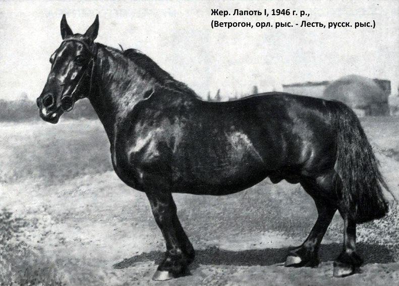 Мутация коня по кличке Лапоть - фото 03, главная Конные истории Копыта , конный журнал EquiLIfe