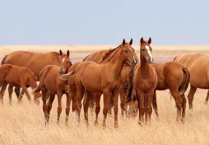 Разведение и селекция лошадей - фото 37380, главная Лошадь Содержание лошади , конный журнал EquiLIfe