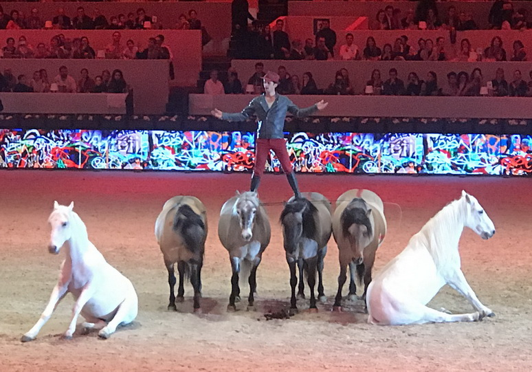 Парижская выставка Salon du Cheval 2018 - фото IMG_7124, главная Конные истории События Содержание лошади , конный журнал EquiLIfe