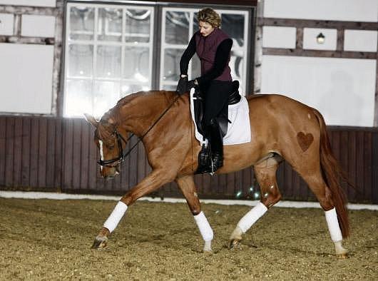 """Когда """"вперед и вниз"""" ВРЕДНО для лошади - фото Natascha, главная Тренинг , конный журнал EquiLIfe"""