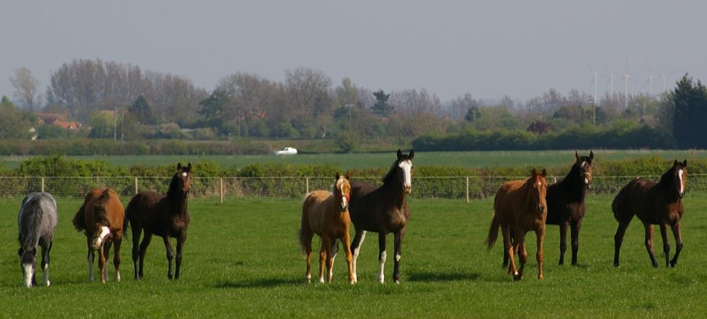 Разведение и селекция лошадей - фото Yadrinskiy_konezavod_vozrojdaetsya-1024x463, главная Лошадь Содержание лошади , конный журнал EquiLIfe