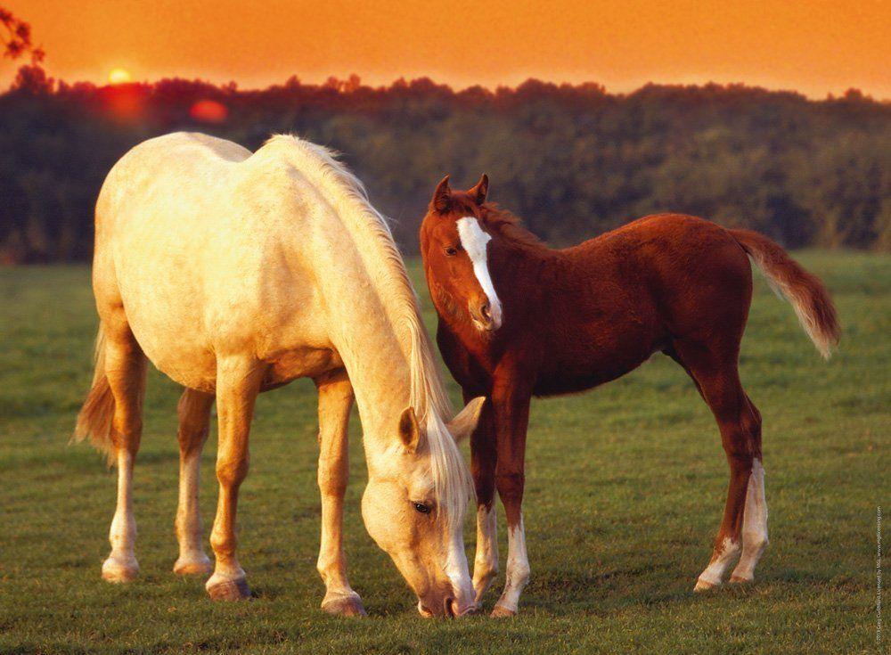 Разведение и селекция лошадей - фото adf8385b95e6b2203ef4c9516e181945, главная Лошадь Содержание лошади , конный журнал EquiLIfe