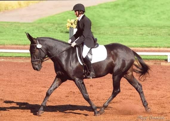 Разведение и селекция лошадей - фото f26a50653c5aa5fdae843e7737366ac2-govt-mule-pretty-horses, главная Лошадь Содержание лошади , конный журнал EquiLIfe