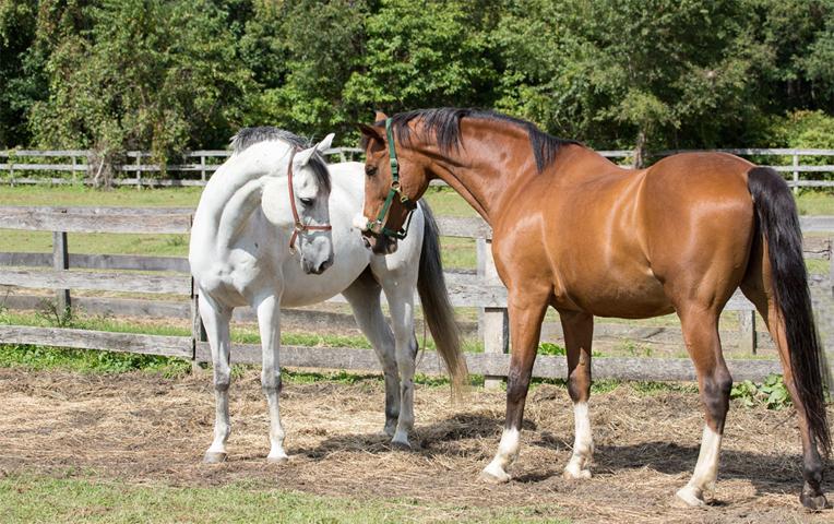 Разведение и селекция лошадей - фото horse86, главная Лошадь Содержание лошади , конный журнал EquiLIfe