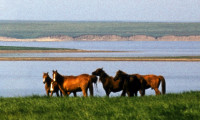 Лошади озера Маныч-Гудило. Фото автора