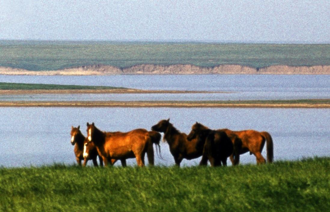 Популяция одичавших лошадей - фото 2, главная Конные истории Поведение лошади Содержание лошади , конный журнал EquiLIfe