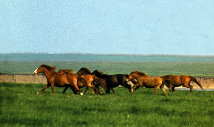 Популяция одичавших лошадей - фото 5, главная Конные истории Поведение лошади Содержание лошади , конный журнал EquiLIfe