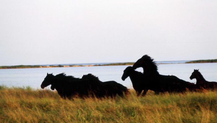 Популяция одичавших лошадей - фото 6jpg, главная Конные истории Поведение лошади Содержание лошади , конный журнал EquiLIfe